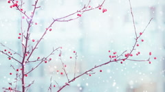 Branches of red berry and snowfall Stock Footage