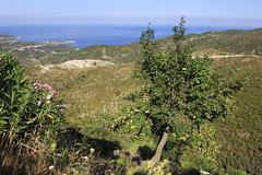 Pear on background of the Aegean coast. Stock Photos