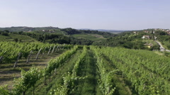 Aerial - Rows of vineyard on a hill Stock Footage