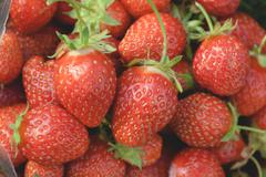 garden strawberries close-up - stock photo