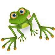 frog - stock illustration
