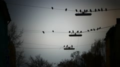 Flock of Birds flying in mysterious cloudy sky electric cable line Stock Footage