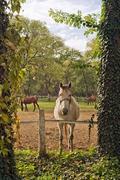 Beautiful white horse on the farm ranch Kuvituskuvat