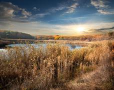 Stock Photo of Reeds and lake
