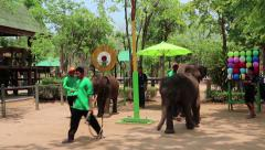 Show of elephants in Thailand Stock Footage