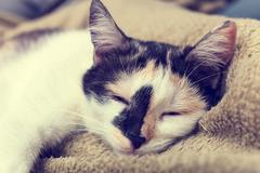 bored cat lying on the sofa - stock photo