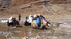 Yaks with baggage crossing puddle in Tibet. Stock Footage
