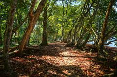 Footpath under trees along the coast of costa rica Stock Photos