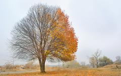 Autumn cherry tree Stock Photos