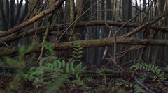 Tracking shot from a falling tree in the forest detail Stock Footage