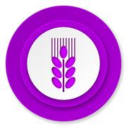 grain icon, violet button, agriculture sign. - stock illustration