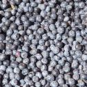 Stock Photo of a lot of blueberries