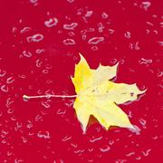 part of red car with autumn leaf - stock photo