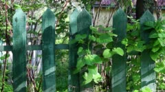 Green vines on wooden fence in breeze Stock Footage