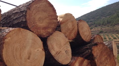 Stack of tree logs Stock Footage
