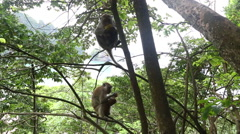 Monkeys in the rainforest overlooking the sea Stock Footage