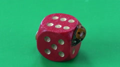 Two ladybug ladybird ladyluck on red dice with number six- success concept Stock Footage