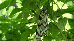 Paper Kite. Taiwan butterfly Stock Footage