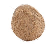 Whole coconut isolated on white background Stock Photos