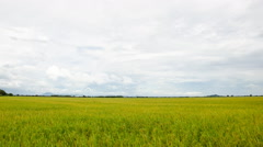 Rice fields and cloud, Stock Footage