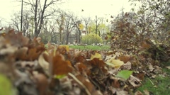 Autumn leaves rise to turbulence in the park-slow motion Stock Footage