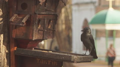 Ancient Orthodox churches, jackdaw Stock Footage