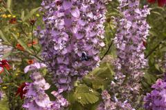 Blue carpenter bee Stock Photos