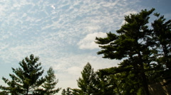 Clouds Trees Sky Timelapse - stock footage