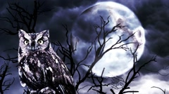 Spooky Halloween owl in the moonlight Stock Footage