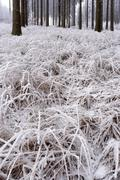 Stock Photo of Hoarfrost on grass