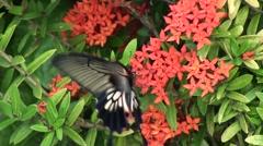 Butterfly's proboscis Stock Footage