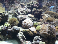 Reeves and fishes. Related clips are in my portfolio in 1920x1080. Stock Footage