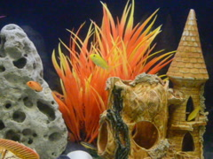 The underwater world in an aquarium. Related clips have in my portfolio in HD. Stock Footage