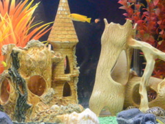 Underwater landscape. Related clips are in my portfolio in 1920x1080. Stock Footage