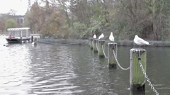 Gulls resting on the dock of a river Stock Footage