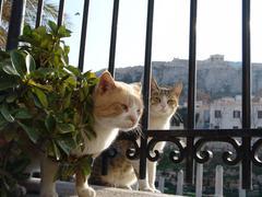 Greek cats Stock Photos