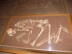 Skeleton Kuvituskuvat