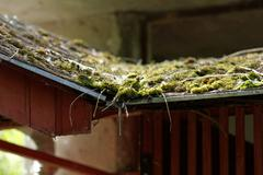 Mossy roof Stock Photos