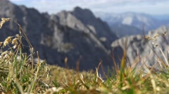 Focus change from foreground vegetation to background alpine mountain peaks Stock Footage
