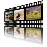 Filmstrip of Domestic Farm Animals - stock photo