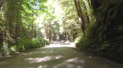 Forest Road Drive-Lapse Stock Footage
