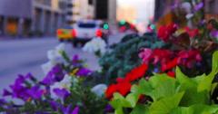 Flowerbed Tilt in Denver, CO - stock footage