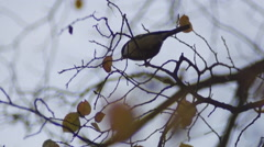 Tit on a branch Stock Footage
