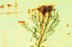 Shadow of plant on grunge tin - stock photo