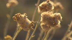 Desert Wild Flowers, Sunset Landscape on Coastline, Arid Plants on Seashore Stock Footage