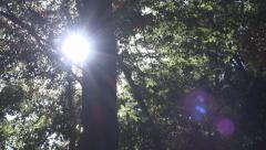 Foliage Forest Leaves, Sunshine, Sun Rays, Beam in Branches in Wood, Summer View Stock Footage