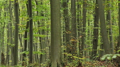 Beech forest in the mountain Stock Footage