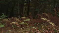 Various plants in a wooded area during autumn Stock Footage