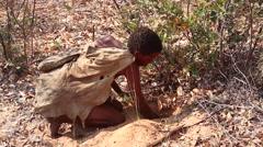 San Bushmen Medicine Man digging for roots for food and medicine. Stock Footage