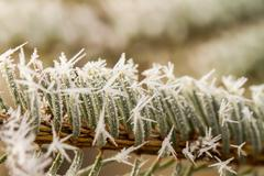 rime, hoarfrost on a pine branch - stock photo